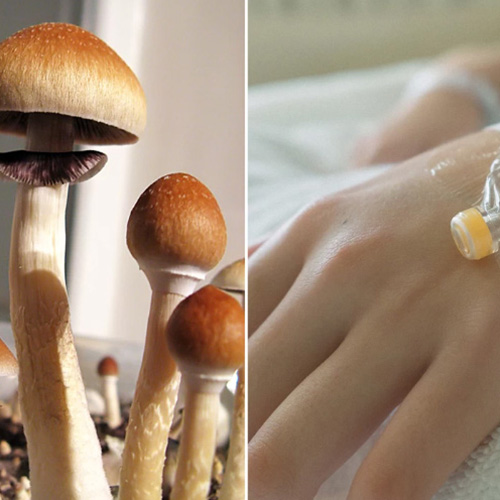 Here Comes the Legal Case for Medicinal Psychedelics