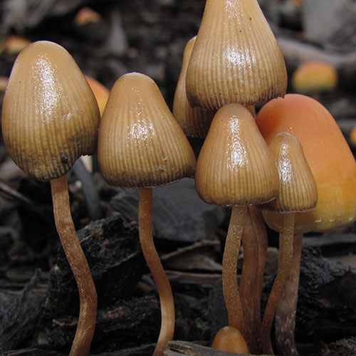 Canada Will Let Terminally Ill Patients Use Psychedelic Mushrooms For End-Of-Life Care